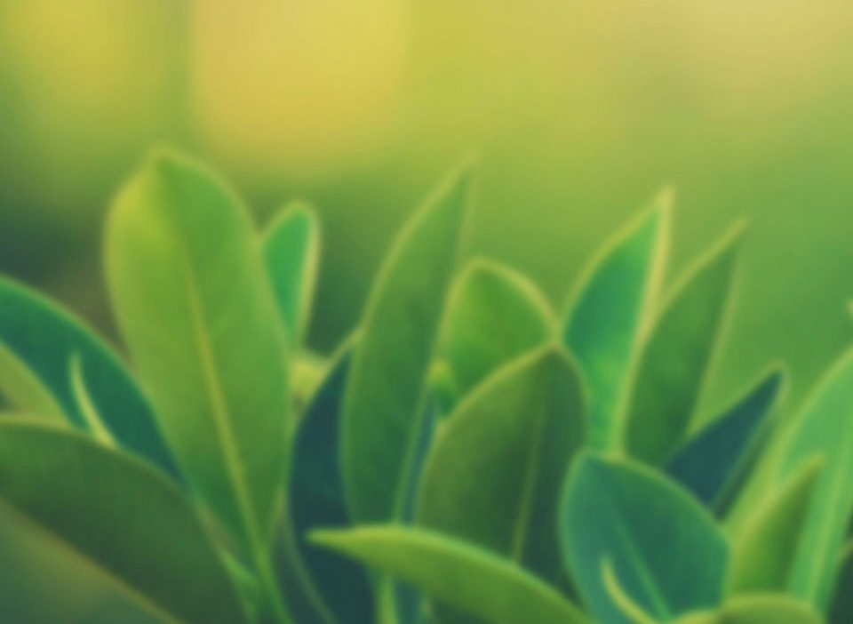 topuk-dikenine-karşı-faydalı-bitkiler-nelerdir